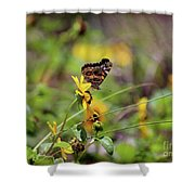 American Lady Butterfly Seaside Shower Curtain