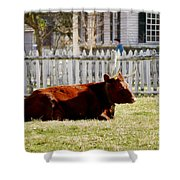American Milking Devon In Spring Shower Curtain