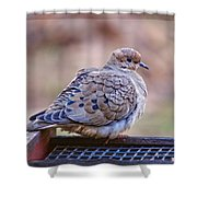 American Mourning Dove Shower Curtain