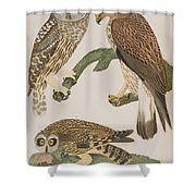 American Owl Shower Curtain