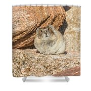 American Pika Focuses On The Camera Shower Curtain