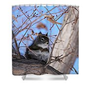 American Red Squirrel Shower Curtain