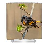 American Redstart Shower Curtain