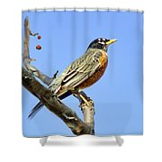 American Robin - 1 Shower Curtain