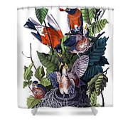 American Robin Audubon Birds Of America 1st Edition 1840 Octavo Plate 142 Shower Curtain