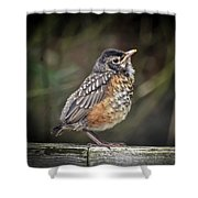 American Robin Fledgling Shower Curtain