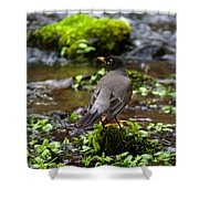 American Robin In Garden Springs Creek Shower Curtain