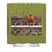 American Robin  In Spring          March            Indiana Shower Curtain