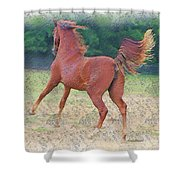 American Saddlebred Filly Shower Curtain
