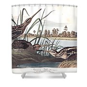 American Snipe Shower Curtain