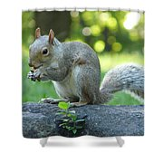 American Squirrel Shower Curtain
