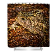 American Toad Shower Curtain
