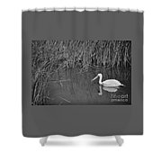 American White Pelican Among Reeds         Minnesota Zoo          Autumn Shower Curtain