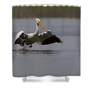 American White Pelican Da Shower Curtain