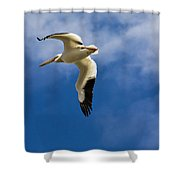American White Pelican In Flight Shower Curtain