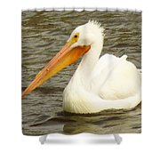 American White Pelican Shower Curtain by Lori Frisch