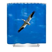 American White Pelican Shower Curtain