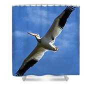 American White Pelican Wings Shower Curtain
