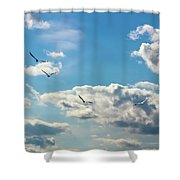 American White Pelicans Flying Shower Curtain