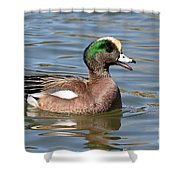 American Widgeon Calling From The Water Shower Curtain