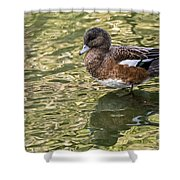 American Wigeon In Autumn Shower Curtain