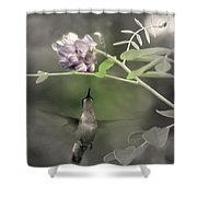 American Wisteria Shower Curtain