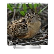 American Woodcock At Rest Shower Curtain