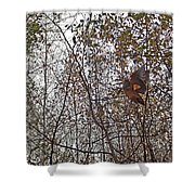 American Woodcock In October Foliage Shower Curtain