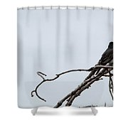 Amid The Branches Shower Curtain