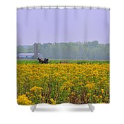 Amish Buggy And Yellow Field Shower Curtain