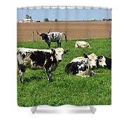 Amish Farm With Spotted Cows And Cattle In A Field Shower Curtain