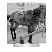 Amish Horse Shower Curtain