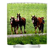 Amish Horse Team Shower Curtain