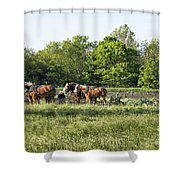 Amish Man Plowing Shower Curtain