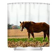 Amish Work Horse Shower Curtain