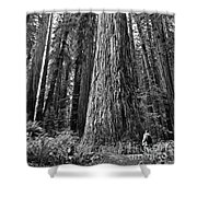 Among Giants Shower Curtain