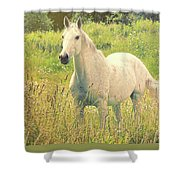 Among The Daisies Shower Curtain