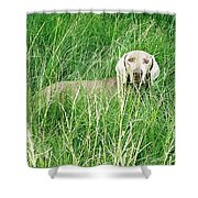 Among The Grasses Shower Curtain