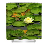 Among The Lily Pads Shower Curtain