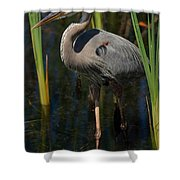 Among The Reeds Shower Curtain