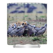 Among The Vultures 2 Shower Curtain
