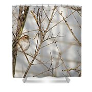 Amongst The Branches Shower Curtain