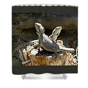 Amphion And Zethus Shower Curtain