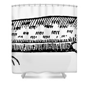 Amphisbaena Shower Curtain