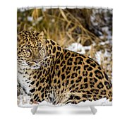 Amur Leopard In A Snowy Forrest Shower Curtain