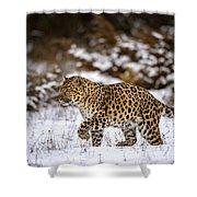 Amur Leopard Walks In A Snowy Forest Shower Curtain