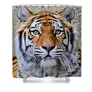 Amur Siberian Tiger Shower Curtain