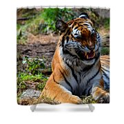 Amur Tiger 3 Shower Curtain