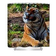 Amur Tiger 6 Shower Curtain