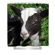 Amy's Lamb Shower Curtain